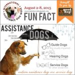 Info & viden om hunde