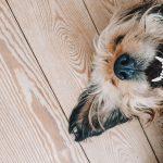 3 gode råd: Sådan giver du din hund velvære