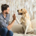Sådan skaber du trivsel hos din hund